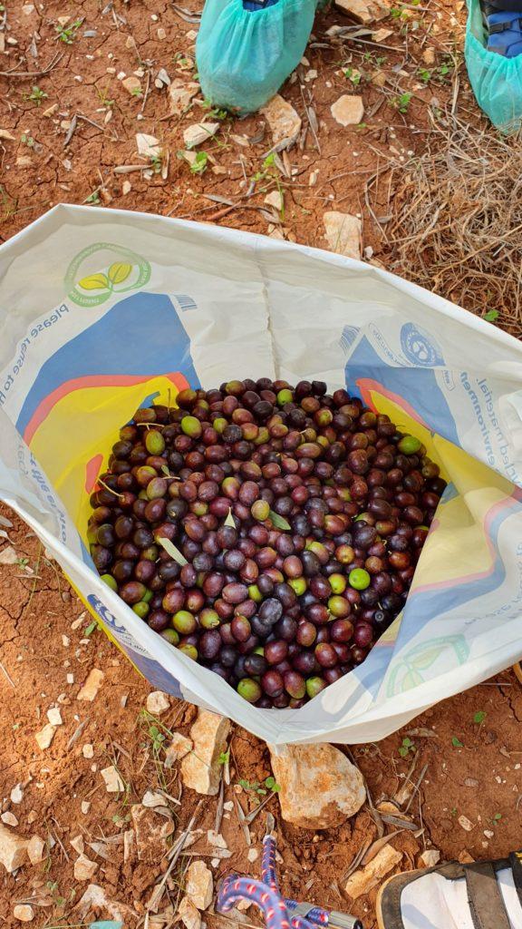 Eine Tüte mit ca. 10 kg Oliven